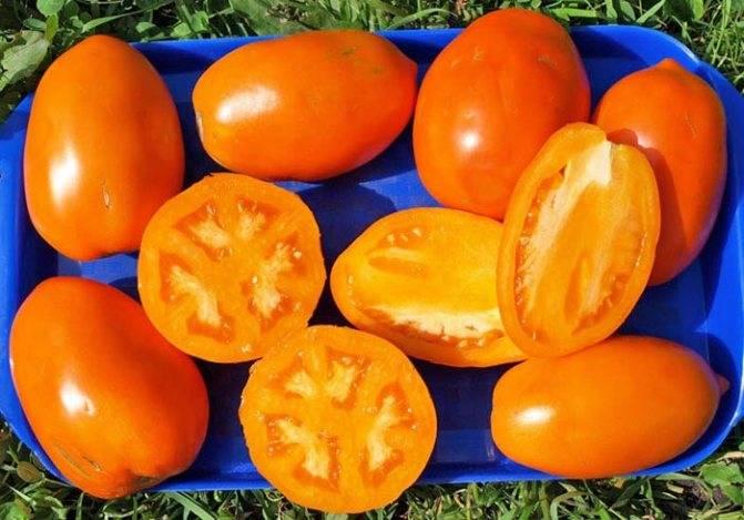 Выращивание томата кенигсберг