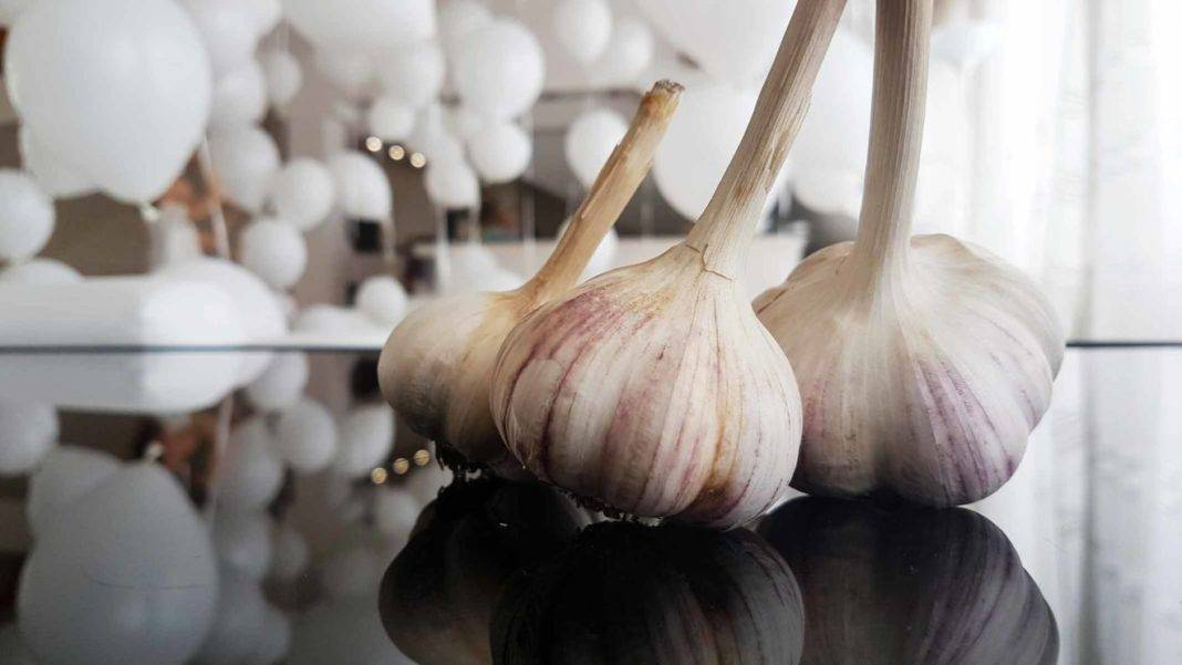 Специфика технологии выращивания озимого чеснока