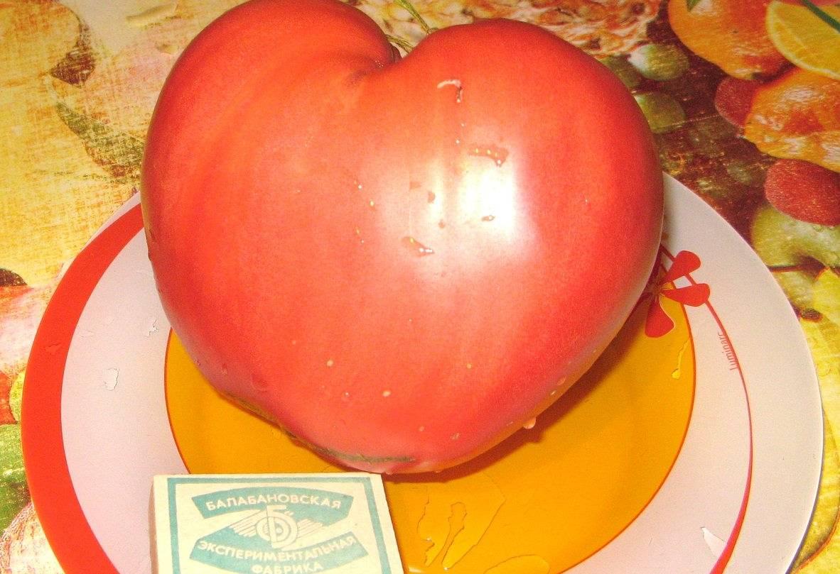 Розовый спам: описание сорта томата, характеристики помидоров, посев