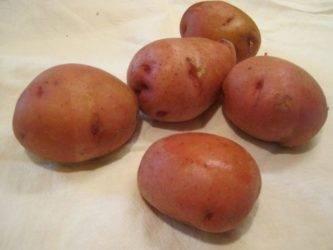 Самые лучшие сорта картофеля: топ-10 самых вкусных и урожайных сортов