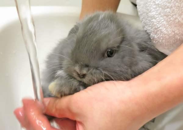 Декоративные кролики: породы, уход и содержание, чем кормить, разведение, размножение, отзывы владельцев