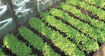 Сидераты для томатов осенью и весной. какие лучше использовать для восстановления почвы