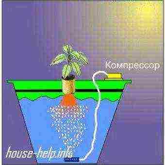 Технология выращивания зелени на гидропонике в домашних условиях