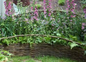Наперстянка: посадка и уход, выращивание из семян, виды и сорта