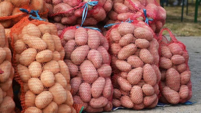Средняя урожайность картофеля с гектара по регионам россии