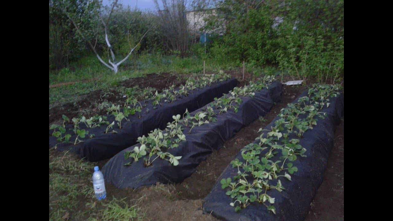 Подготовка почвы и грядок для клубники своими руками весной, состав и кислотность грунта для земляники