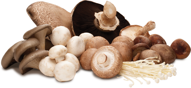Можно ли есть грибы на диете при похудении