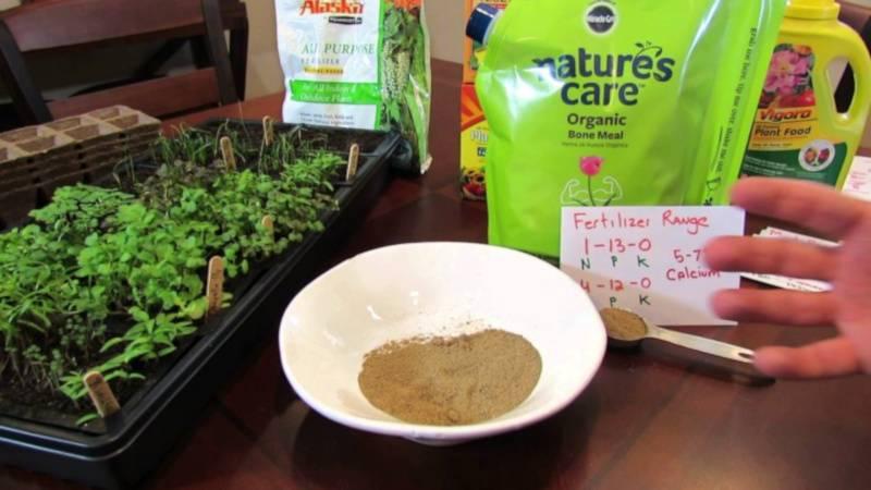 Применение кровяной муки для удобрения растений