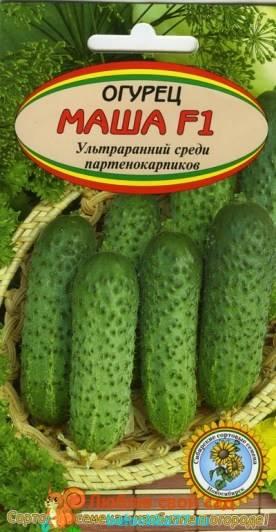 Огурец хрустик (f1): описание посадки и ухода, фото кустов и плодов, отзывы тех, кто выращивал этот гибрид