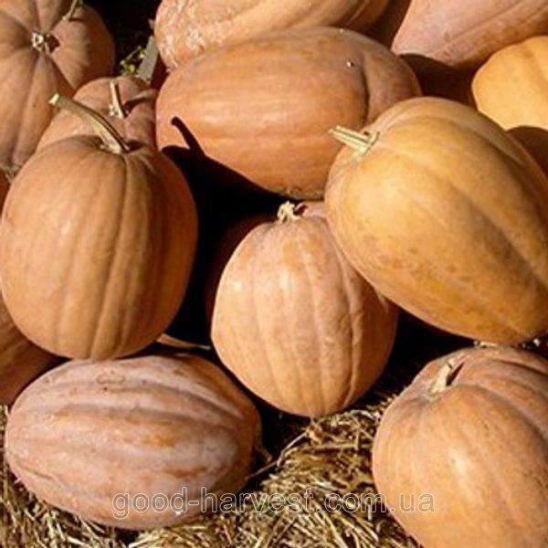 Описание 25 сортов мускатной тыквы, выращивание и уход в открытом грунте