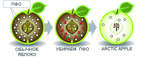 Почему темнеет яблоко?