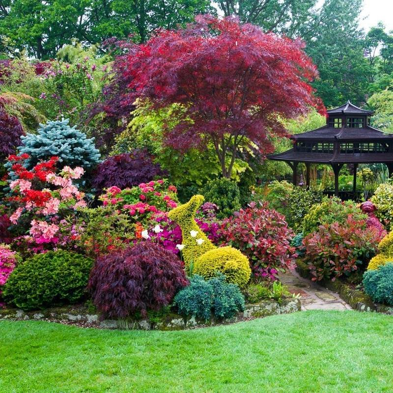 Самые морозоустойчивые плодовые и декоративные деревья и кустарники для дачи: фото, названия и описание