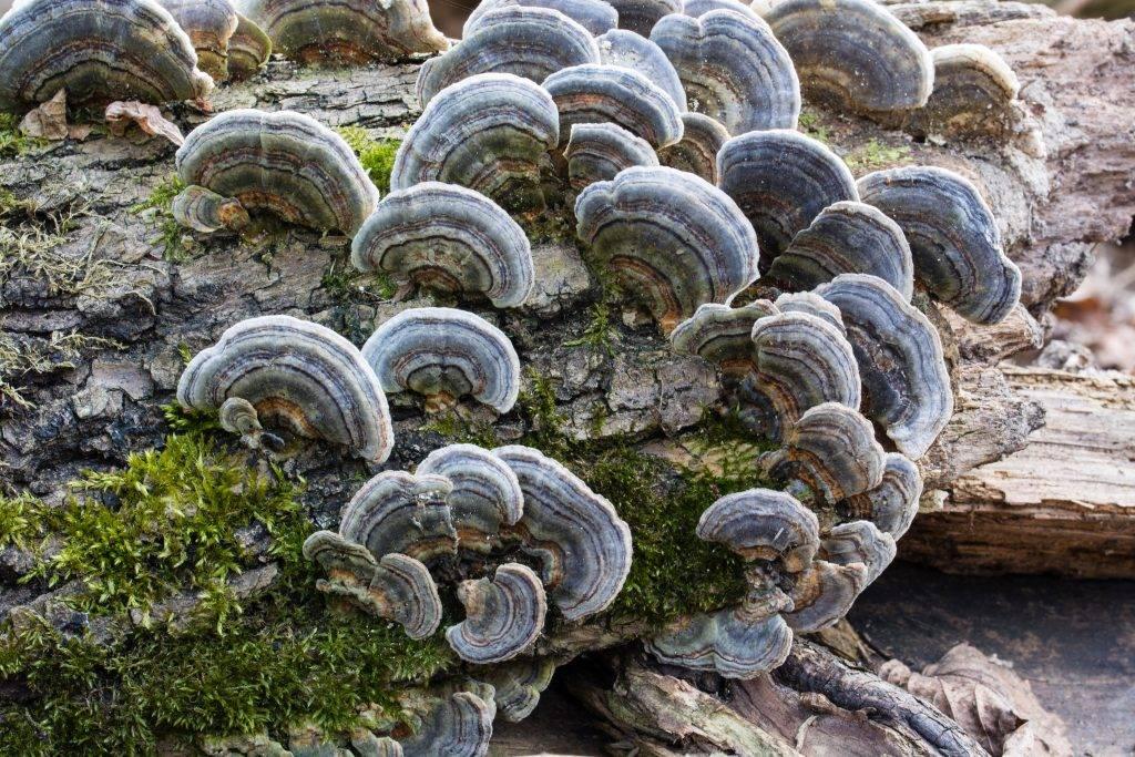 Симбиоз: бактерии и растения, грибы, организм человека