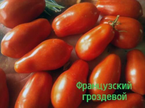Общие сведения и выращивание сорта помидоров «французский гроздевой»