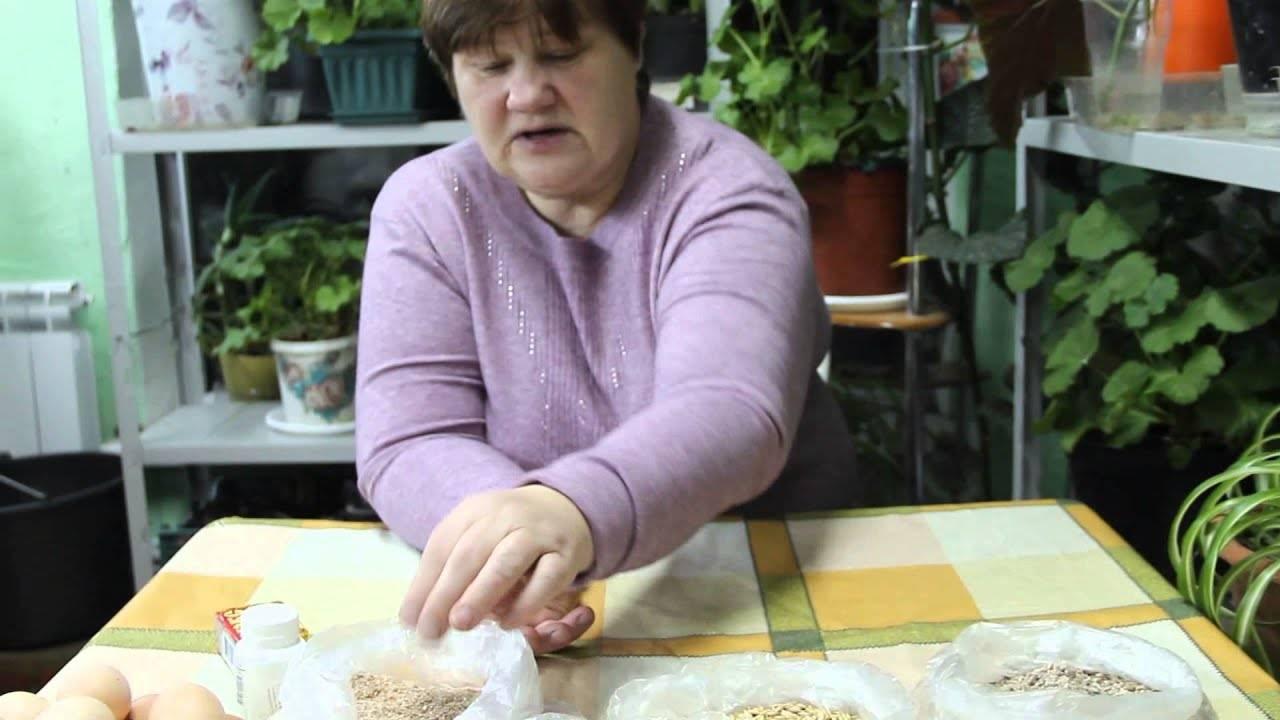 Чем кормить кур несушек для хорошей яйценоскости