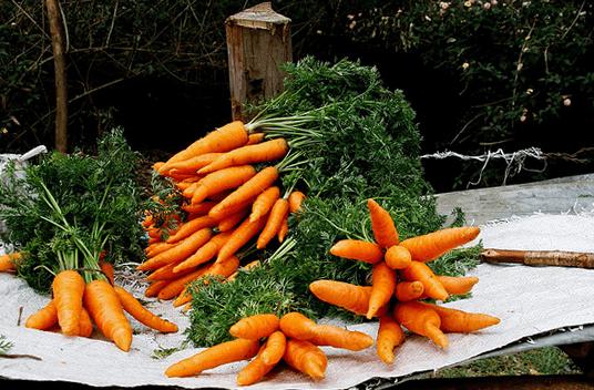 Как хранить морковь на зиму в погребе в домашних условиях: в чем правильно и как лучше? русский фермер