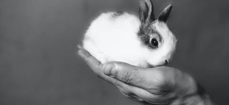 Можно ли давать кроликам капусту? – миф или реальность? | мир кролика