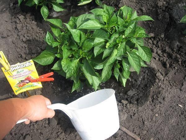 Чем подкормить рассаду перцев, чтобы были толстенькие и крепкие кустики