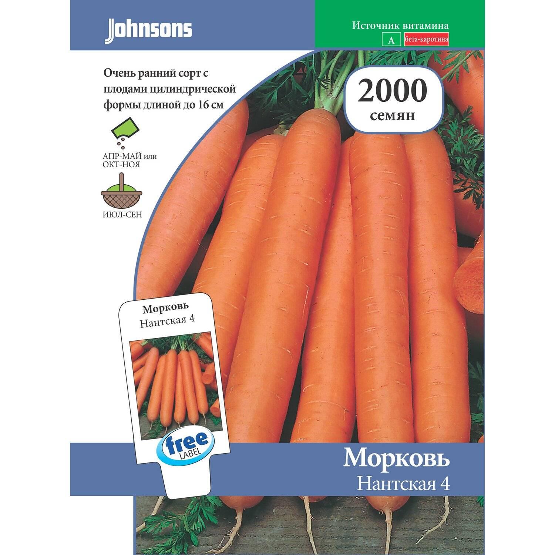 Все о моркови форто: её качествах, составе и выращивании, а также об отличии от других видов продукта