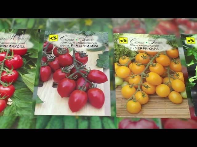 Характеристика томатов черри ира
