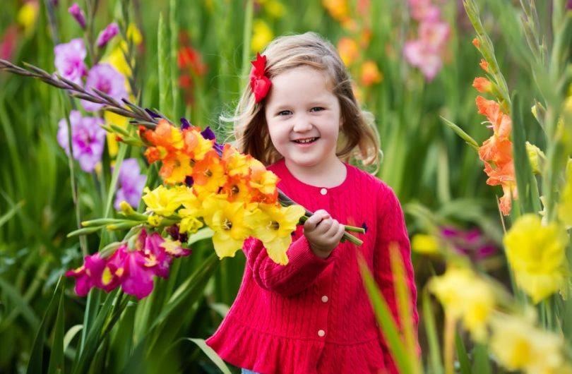 Как сажать гладиолусы весной правильно - секреты садоводов