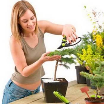 Как ухаживать за комнатными растениями — основные правила