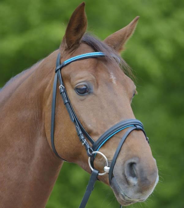 Об уздечке для лошади: особенности использования узды и недоуздка