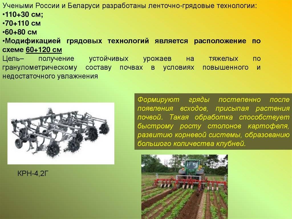 Как растет картошка: агротехника выращивания картофеля