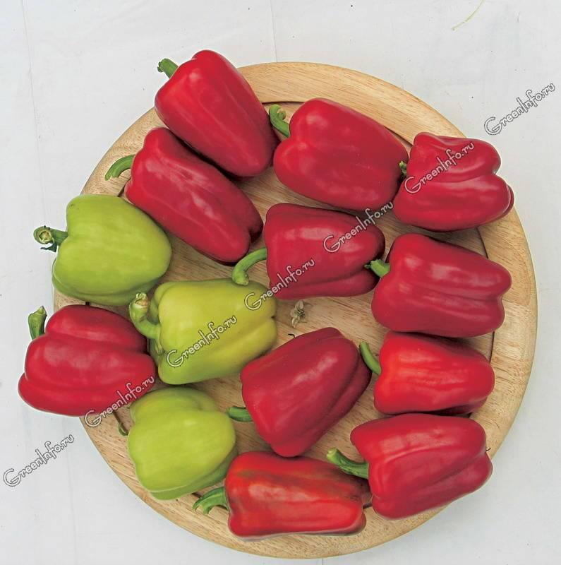 Лучшие сорта перцев для сибири: для теплиц, для открытого грунта с описанием и фото