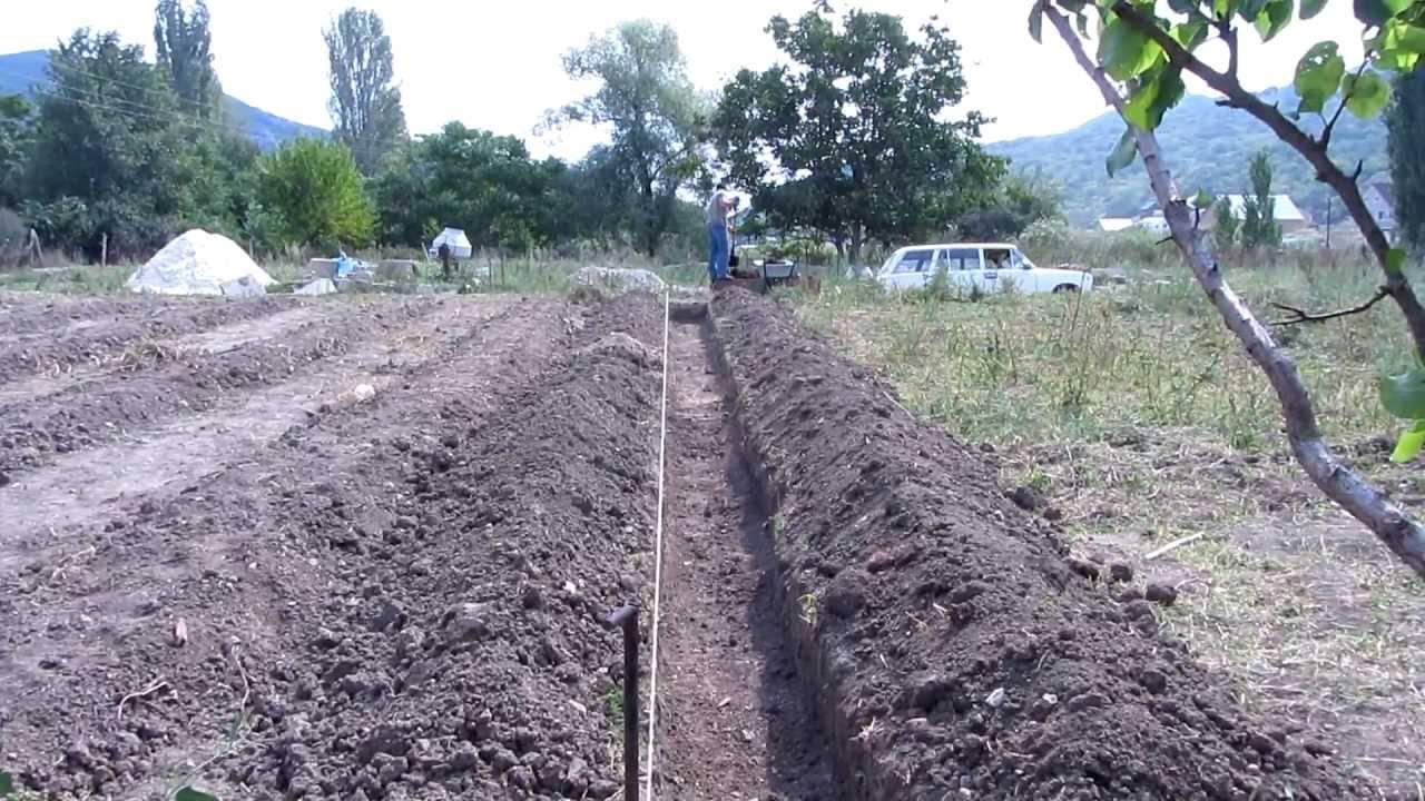 Посадка малины: как правильно посадить летом, схема и пошаговая инструкция, выбор почвы