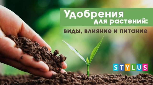 Стимулятор роста для растений: виды активаторов и гормонов, лучшие препараты