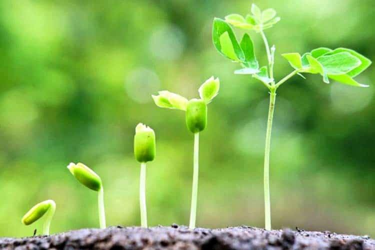 Стимуляторы роста растений: применение для комнатных растений