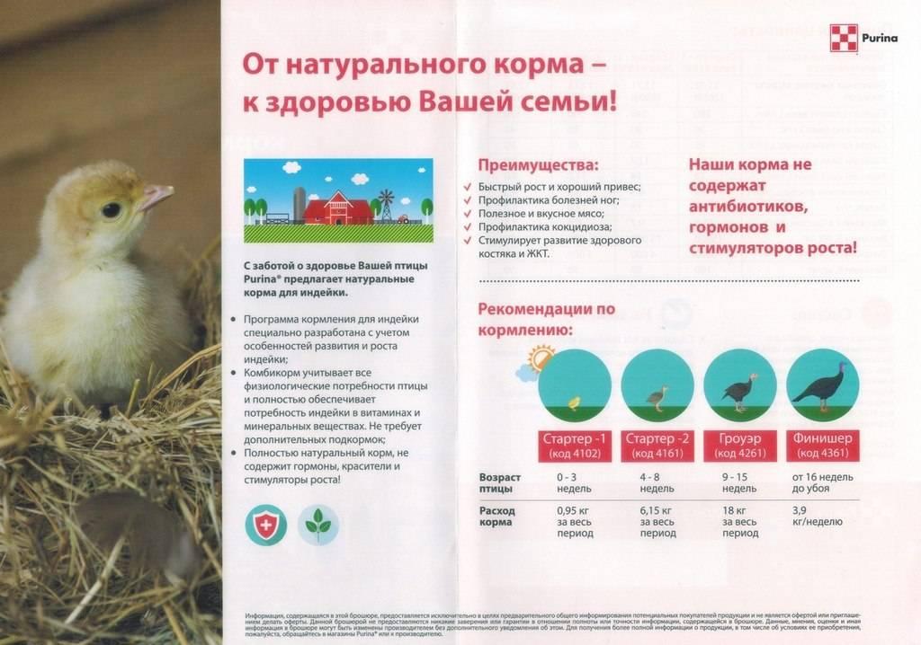 Комбикорм для индюков: можно ли кормить и как сделать своими руками