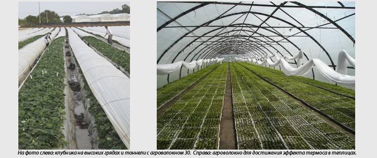 Агроволокно — что это такое, применение, цены, где купить