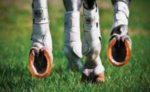 Зачем подковывают лошадей: причины и виды конструкций, правила выполнения
