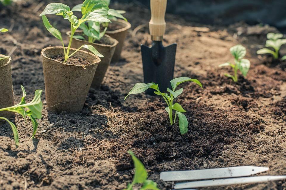 Органические удобрения: жидкие и твердые, животного и растительного происхождения