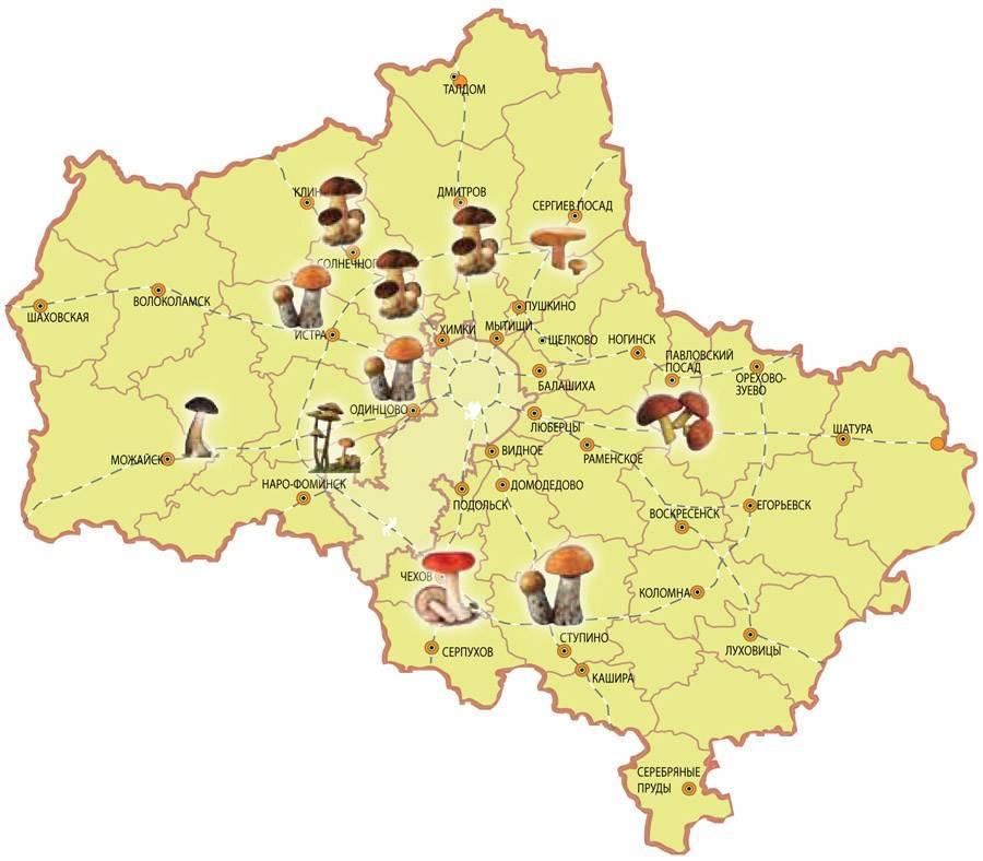 Грибы ставропольского края в 2021 году: лучшие места и сезон сбора