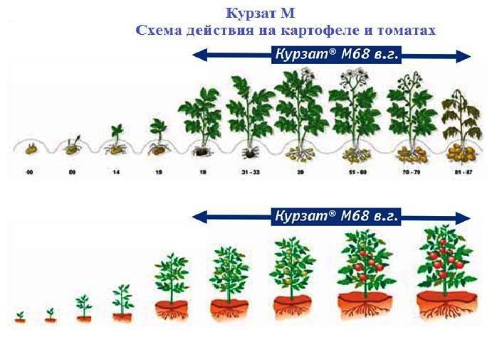 Топаз - фунгицидный препарат, инструкция по применению для растений, отзывы, аналоги, совместимость, состав