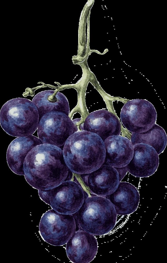 Описание сорта винограда рошфор