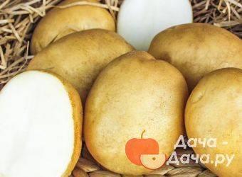 Картофель триумф: описание сорта, характеристики, достоинства, правила посадки, рекомендации по выращиванию, отзывы