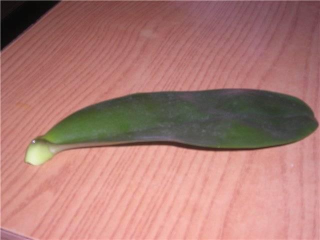Как нарастить корни орхидеи фаленопсис, реанимировать и стимулировать рост корней