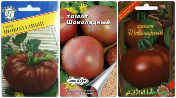 Томат шоколадное чудо: описание и характеристика сорта, отзывы, фото, урожайность | tomatland.ru