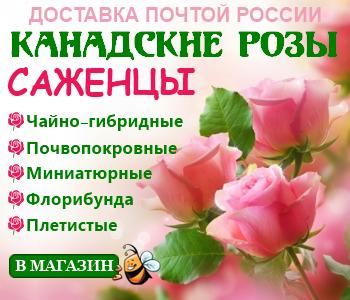 Парковые розы: топ-17 лучших сортов для сада   100+ фото