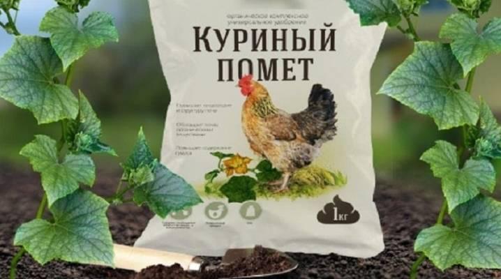 Подкормка огурцов куриным пометом: как удобрять, технология, особенности и сроки внесения