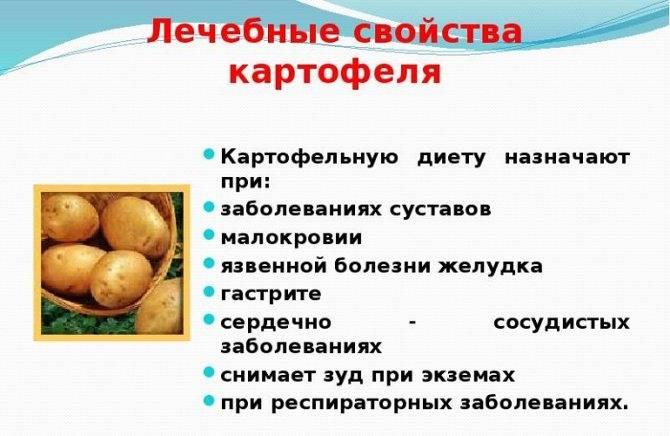 Узнайте, в чем польза и вред сырого картофеля для вашего организма!
