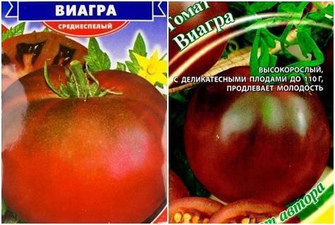 Томат виагра — описание сорта, фото, урожайность и отзывы садоводов