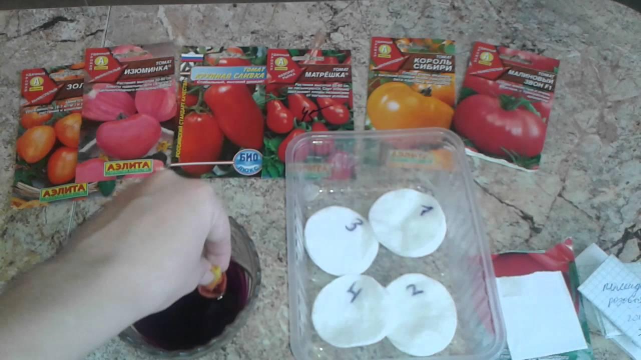 Как провести подготовку семян помидоров к посадке на рассаду