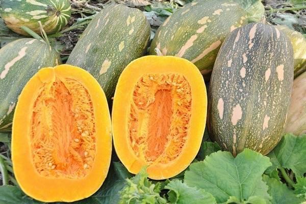 Тыква матильда: описание и характеристика сорта, урожайность с фото