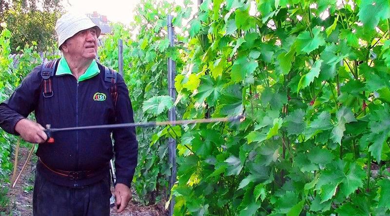 Что такое баковые смеси для винограда и лучшие рецепты