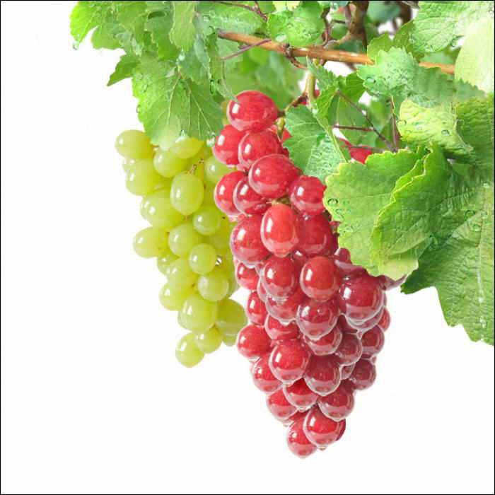 Готовим баковые смеси для винограда правильно